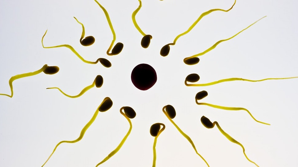 Sperm Contains How Much Protein